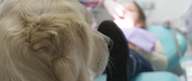 Pet Therapy: in cosa consiste? Quali sono i suoi benefici?